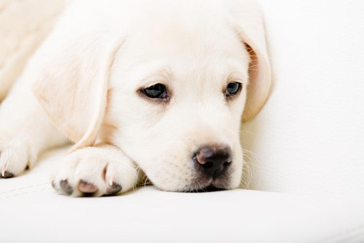 puppy diarrhea treatment