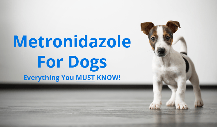 prednisone for epilepsy in dogs