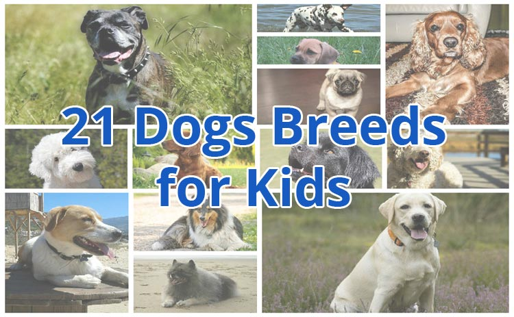 21 best dog breeds for kids they ll love you for this for Best dogs for you
